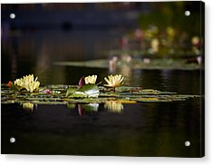 Lily Pond Acrylic Print by Peter Tellone