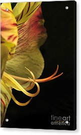 Lily Stamens Acrylic Print by Karen Slagle