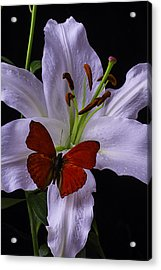 Lily With Red Butterfly Acrylic Print by Garry Gay