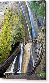 Limekiln State Park Acrylic Print by Jenna Szerlag