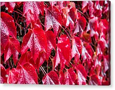 Linne Color Acrylic Print by Chad Dutson