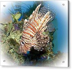 Lion Fish 2 Acrylic Print by TN Fairey