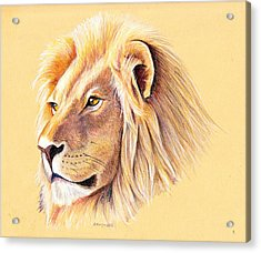 Lion Acrylic Print by Mary Mayes