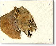 Lioness Acrylic Print by Juan  Bosco