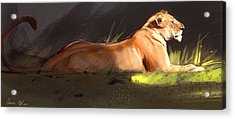 Lioness Sketch Acrylic Print by Aaron Blaise