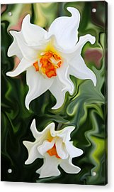 Liquid Narcissus Acrylic Print by Mary Burr