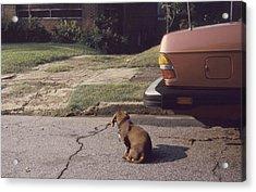 Little Brown Dog Acrylic Print by John Hines
