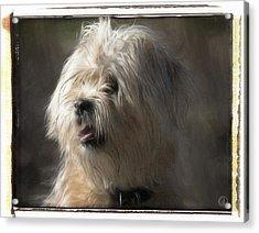 Little Doggie Acrylic Print by Gun Legler