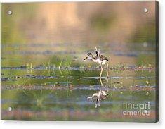 Little Flaps Acrylic Print by Ruth Jolly