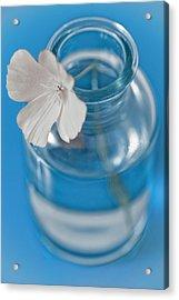Little Flower In A Vase Acrylic Print by Frank Tschakert