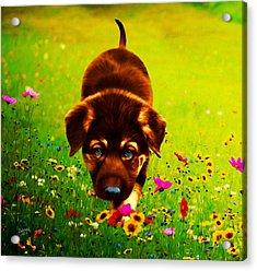 Little Hunter Acrylic Print by Rebelwolf