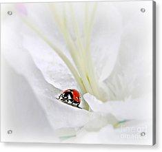 Little Ladybug Acrylic Print by Morag Bates