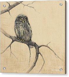 Little Owl Acrylic Print by Lori  McNee