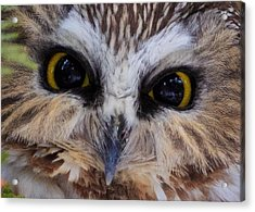 Little Owls Acrylic Print by Everet Regal