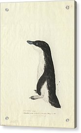 Little Penguin Acrylic Print by Natural History Museum, London