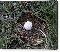 Little White Mushroom Acrylic Print by Jenna Mengersen