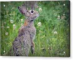 Live In Clover Acrylic Print by Brian Wallace