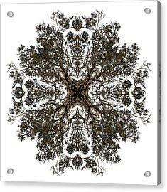 Live Oak Lace Acrylic Print by Debra and Dave Vanderlaan