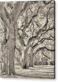 Live Oaks-1 Acrylic Print by Bill LITTELL