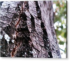 Living Dead Acrylic Print by Lucy D