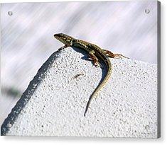 Lizard Acrylic Print by Ramona Matei