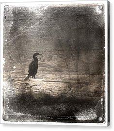 Lone Cormorant Acrylic Print by Carol Leigh