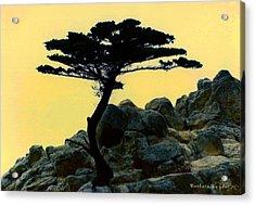 Lone Cypress Companion Acrylic Print by Barbara Snyder