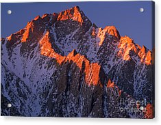 Lone Pine Peak Acrylic Print by Inge Johnsson