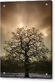 Lone Tree Acrylic Print by Amanda And Christopher Elwell