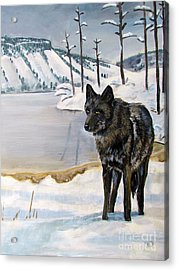 Lone Wolf Acrylic Print by Harriet Peck Taylor