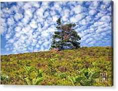 Lonely Tree Acrylic Print by Adrian Evans