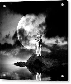 Lonely Wolf With Full Moon Acrylic Print by Jaroslaw Grudzinski