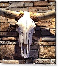 Longhorn Skull Acrylic Print by Patricia Januszkiewicz