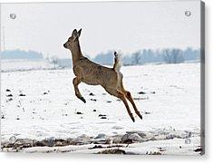Look I Am Flying Acrylic Print by Lori Tordsen