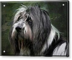 Looking A Little Sad Acrylic Print by Gun Legler