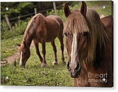Looking At You Acrylic Print by Dan Friend