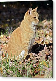 Looking For Prey Acrylic Print by Susan Leggett