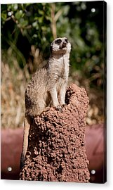 Lookout Post Acrylic Print by Michelle Wrighton