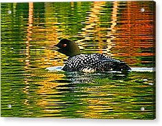 Loon 3 Acrylic Print by Pat Now