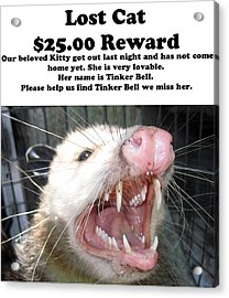 Lost Cat Cash Reward Acrylic Print by Michael Ledray