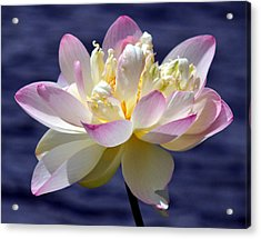 Lotus By The Lake Acrylic Print by Gail Butler