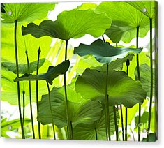 Lotus Leaves Acrylic Print by Tim Gainey