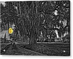 Louisiana Moon Rising Monochrome 2 Acrylic Print by Steve Harrington