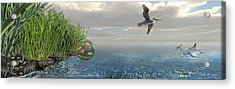 Louisiana Oil Spill Recovery Acrylic Print by Nicolle R. Fuller