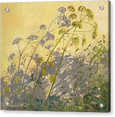 Lovage Clematis And Shadows Acrylic Print by Timothy  Easton