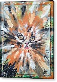 Love For Cats Acrylic Print by Lisa Piper Menkin Stegeman