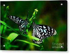 Love Is Like A Butterfly Acrylic Print by Venura Herath