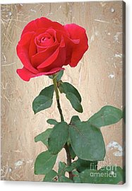 Love Is Like A Red Red Rose Acrylic Print by Janette Boyd
