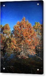 Love Me Longer Acrylic Print by Laurie Search