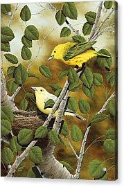 Love Nest Acrylic Print by Rick Bainbridge